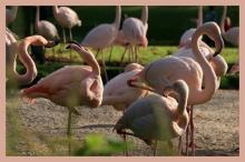 Unten: Flamingos in der Herbstsonne