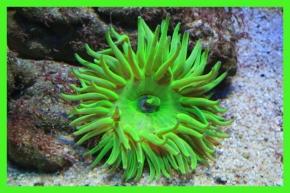 Unten: bunte Unterwasserwelt