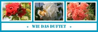 46_antetanni-fotografiert_52-pics-of-the-year_Wie-das-duftet_Collage
