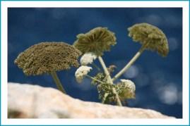 antetanni-unterwegs_Mallorca (4)
