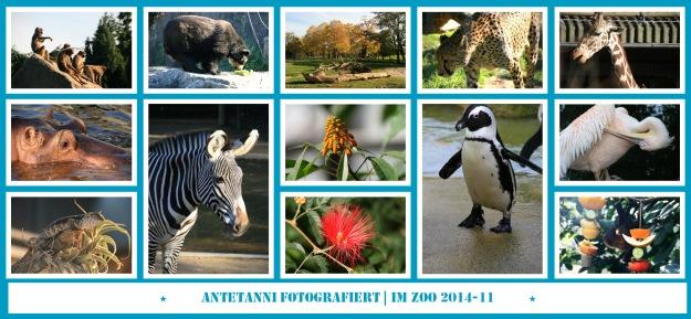 antetanni-fotografiert_Zoo_2014-11