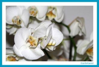 antetanni-fotografiert_Bluetenpracht-Orchidee_2