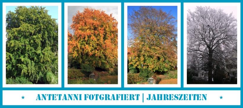 antetanni-fotografiert_Jahreszeiten