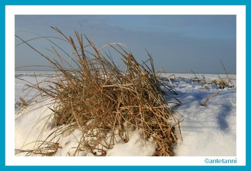 antetanni-fotografiert_Schneespaziergang (1)
