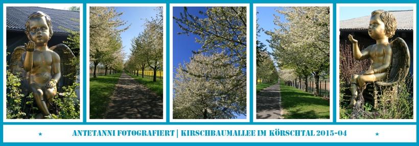 antetanni-fotografiert_Kirschbaumallee-Koerschtal_2015-04