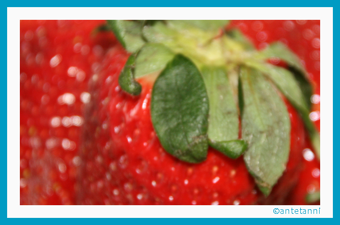 antetanni-kocht_Das-erste-Erdbeereis-Erdbeer-Eis-des-Jahres (1)