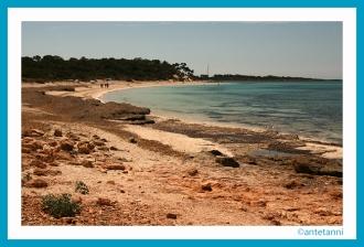 antetanni-fotografiert_Mallorca-2015_Es-Carbo