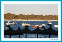 antetanni-fotografiert_Mallorca-2015_Es-Dolc