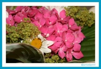 antetanni-fotografiert_Blumengruss-Hortensie-aus-Silkes-Garten (1)