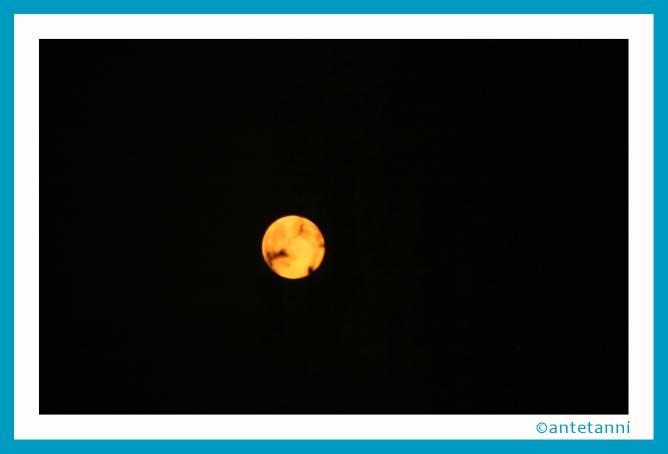 antetanni-fotografiert_Vollmond-Orange_2015-07