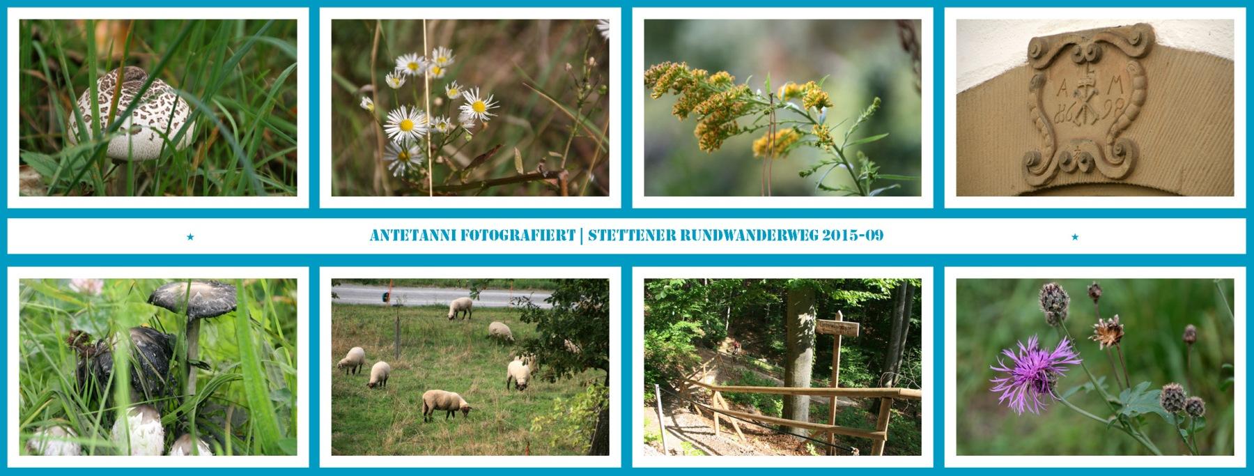 antetanni-fotografiert_Stettener-Rundwanderweg_2015-09_3