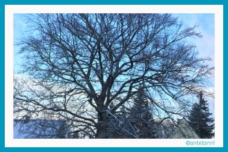 151122_Der-erste-Schnee-in-diesem-Herbst (13)