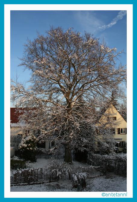 antetanni-fotografiert_Buche_in_Nachbars_Garten_2008