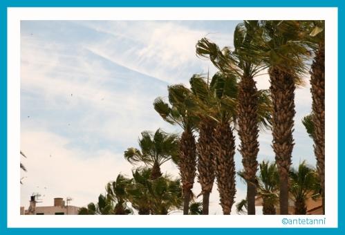 antetanni-fotografiert_Mallorca-2015_2