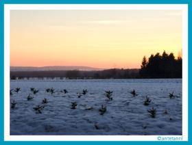 antetanni-fotografiert_Winterstimmung-Feldrand_160121