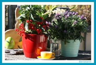 antetanni-fotografiert_Kaffeeplanze+Kaffeepause+Pflanzenfreude_160326 (10)