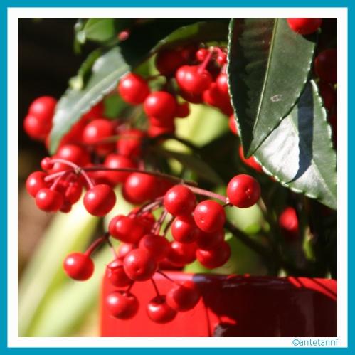 antetanni-fotografiert_Kaffeeplanze+Kaffeepause+Pflanzenfreude_160326 (11)