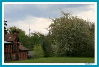 antetanni-fotografiert_Schwaelblesklinge-Dornhaldenfriedhof_2016-05 (5)
