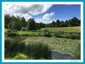 antetanni_Seerosenteich_Botanischer-Garten-Hohenheim