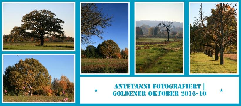 antetanni-fotografiert_2016-10_goldener-oktober