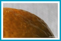 antetanni-fotografiert-Bunt-ist-die-Welt-135-Vitamine (2)