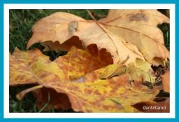antetanni-fotografiert-novemberbaeume-bunt-ist-die-welt-136-3