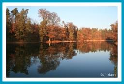 antetanni-fotografiert-novemberbaeume-bunt-ist-die-welt-136-4