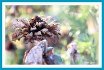antetanni-fotografiert-Blumen-im-Herbst-2018 (1)