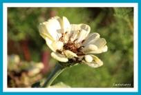 antetanni-fotografiert-Blumen-im-Herbst-2018 (4)