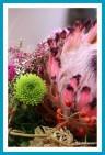 antetanni-fotografiert_Protea-Blumenstrauss_Astern-gruen-pink-2018-11