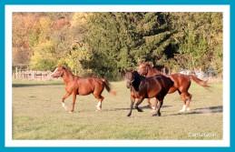 antetanni-unterwegs-Felder-pferde