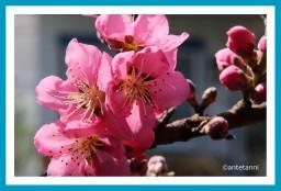 antetanni-fotografiert_pfirsichbluete-pretty-in-pink_2019-03 (4)