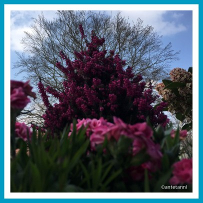 antetanni-fotografiert-fruehling-2019-04
