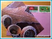 antetanni-freudige-kartengruss-natalie-blumenwiese