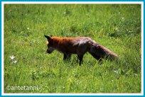 antetanni-fotografiert-knuddelig-52-foto-reise-blogzimmer-woche-18_fuchs-schoenbuch_2