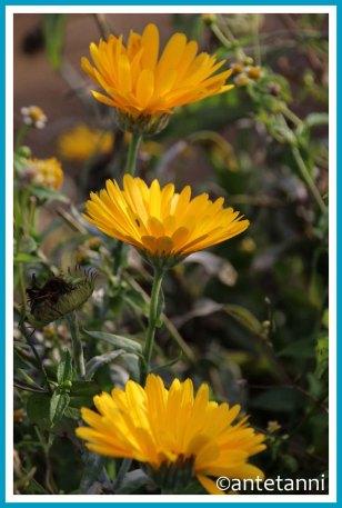 antetanni-fotografiert_12-tel-blick_2020-10_Blumen-zum-Selbstschneiden_Gelb