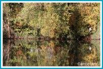 antetanni-fotografiert_12-tel-blick_2020-10_Riedsee-Reiher-Ente-Reiher
