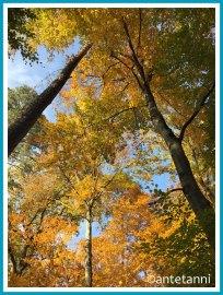 antetanni-fotografiert_52-fotoreise-blogzimmer-sonnenschein-11-baeume-radtour-oktober-in-die-stadt