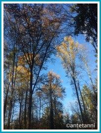 antetanni-fotografiert_52-fotoreise-blogzimmer-sonnenschein-11-sonnenberg-blauer-himmel