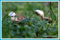 antetanni-fotografiert-39-kleinigkeiten-52-foto-reise-blogzimmer-woche-29_pilze_1
