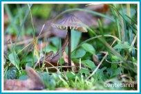 antetanni-fotografiert-39-kleinigkeiten-52-foto-reise-blogzimmer-woche-29_pilze_2