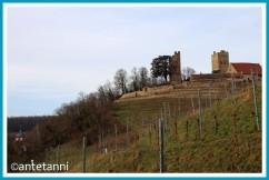 antetanni-52-foto-reise-39-mein-wegbegleiter-blogzimmer-burg-neipperg-brackenheim_T